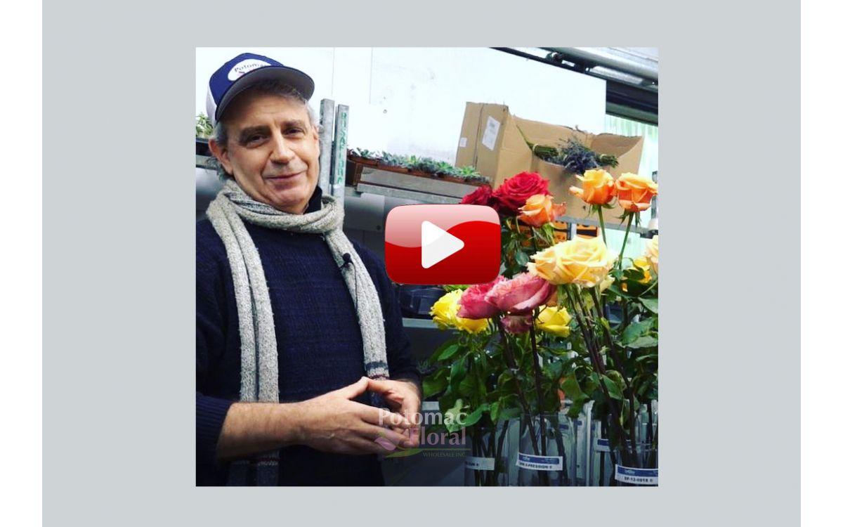 VIDEO: New Rose Varieties & Why Red Roses Cost So Much at Valentine's