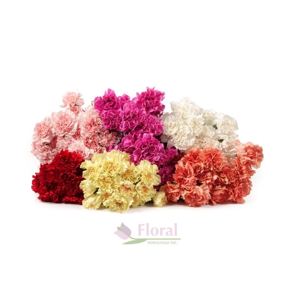 0bcc55065f3d Carnation Assorted Fancy