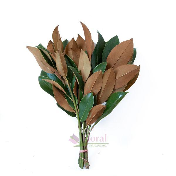 Magnolia tips potomac floral wholesale magnolia tips mightylinksfo