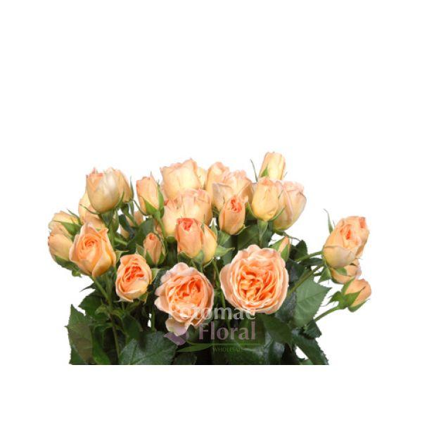 Roses In Garden: Garden Spray Rose, Julianne