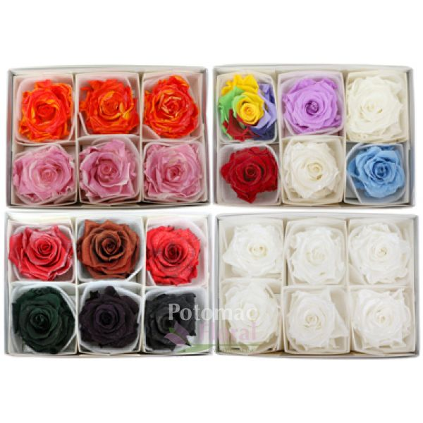 preserved roses specialty large 7cm diameter various colors