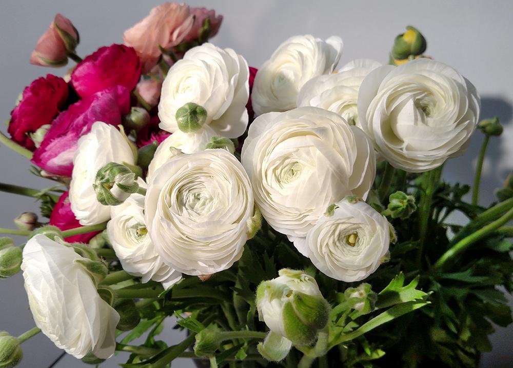 American Grown Flowers Local Flowers Locally Grown Flowers