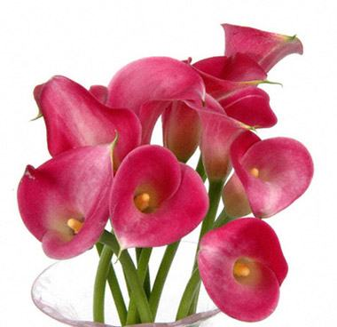 Terms amp conditions this website is operated by potomac floral wholesale inc mightylinksfo
